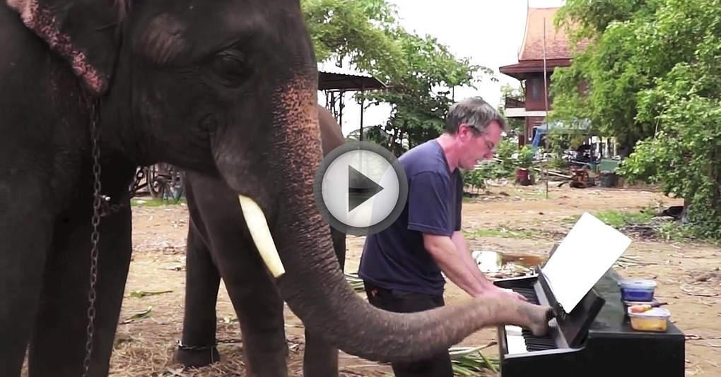 Этот веселый слоненок очень любит играть на пианино