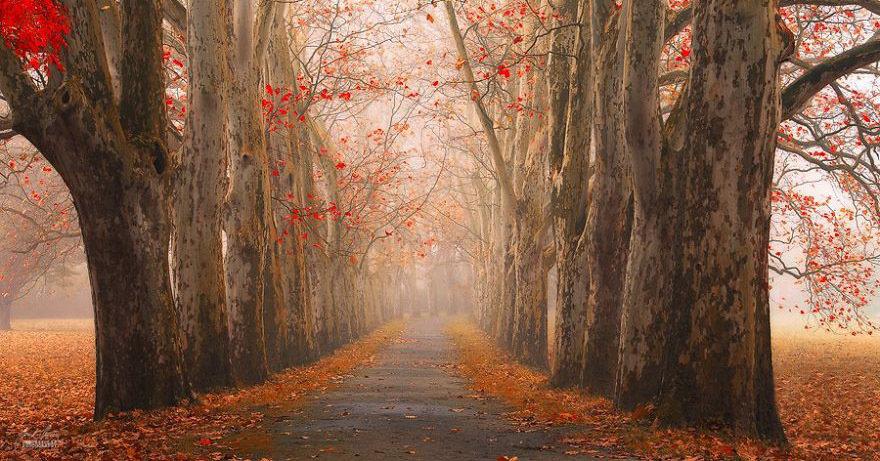 Сказочные фотографии осеннего леса от фотографа Янека Седлара