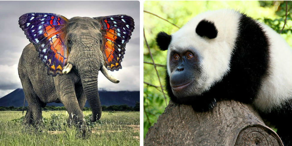 15 безумных и забавных гибридов животных, созданных в фотошопе