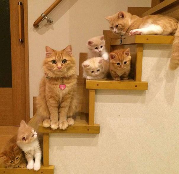 15 мамочек-кошек, которые гордятся своими котятами