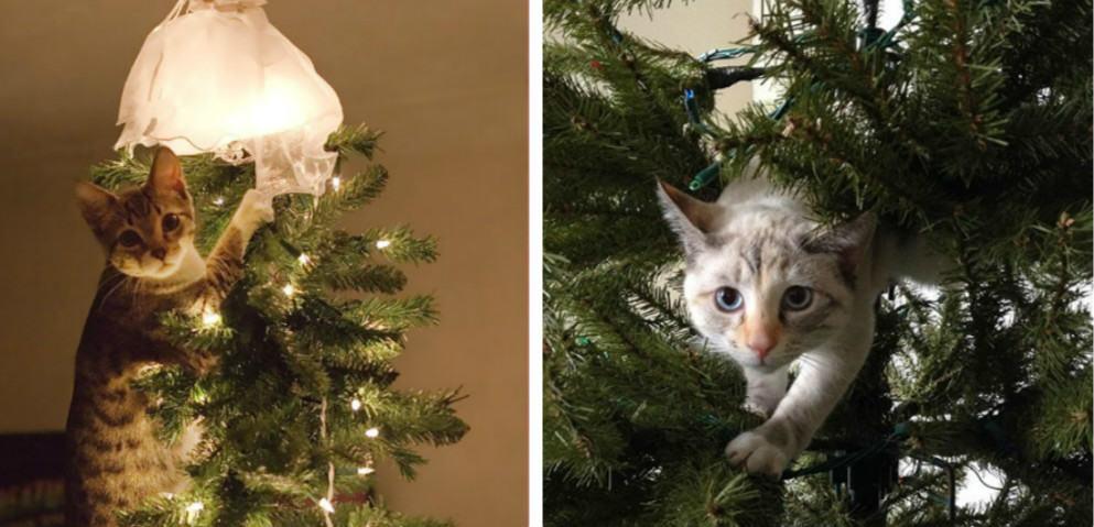 15 котов, которые очень любят украшать новогоднюю елку