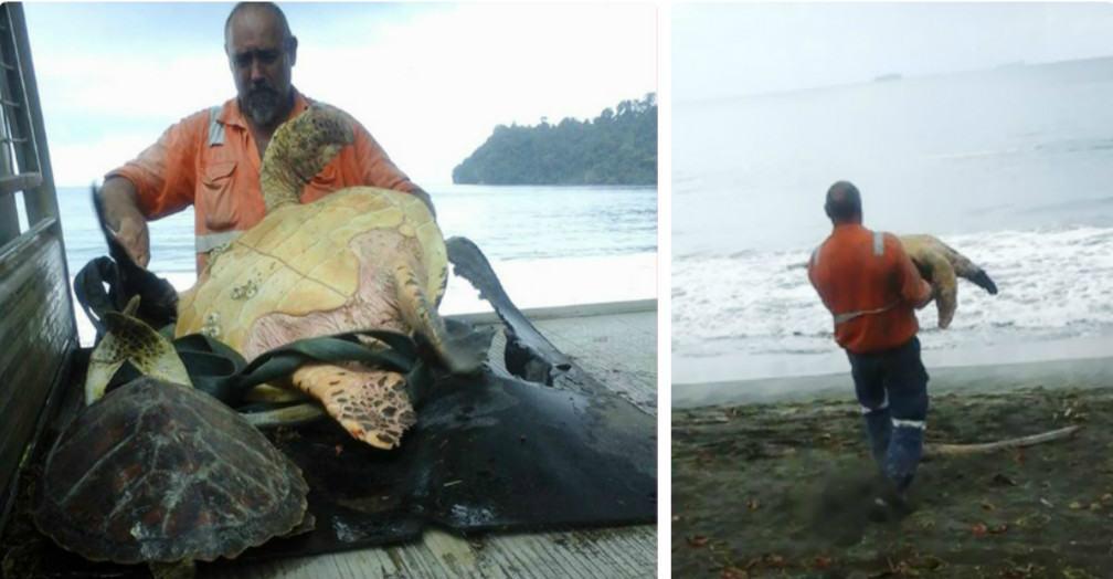 Этот мужчина покупает живых черепах на продуктовом рынке, и вот что он с ними делает