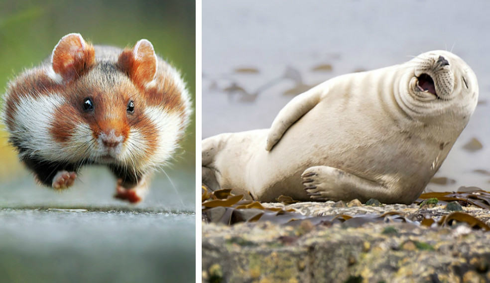 Эти фото победили на конкурсе самых смешных фотографий животных 2015