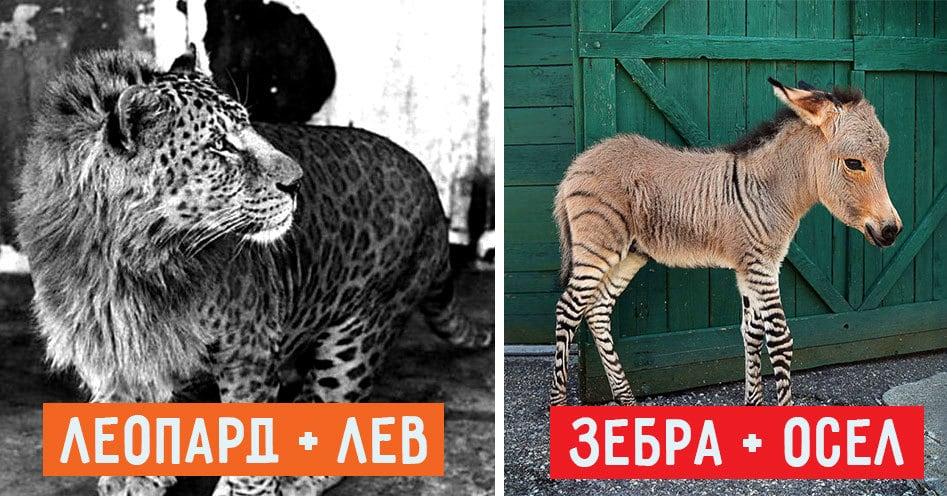 18 гибридов животных, в существование которых сложно поверить
