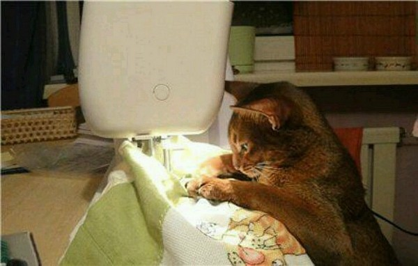 mollie-sewist-cat-sewing