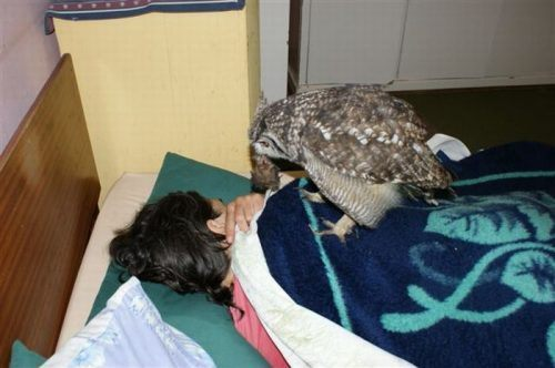 owl saved cat friends 5 Owl gets saved and spends everyday repaying its rescuer (21 Photos)