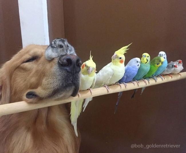 Пес, хомяк и 8 птиц — самая необычная дружба