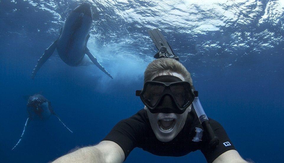 Австралийский фотограф сумел запечатлеть себя одновременно с двумя горбатыми китами