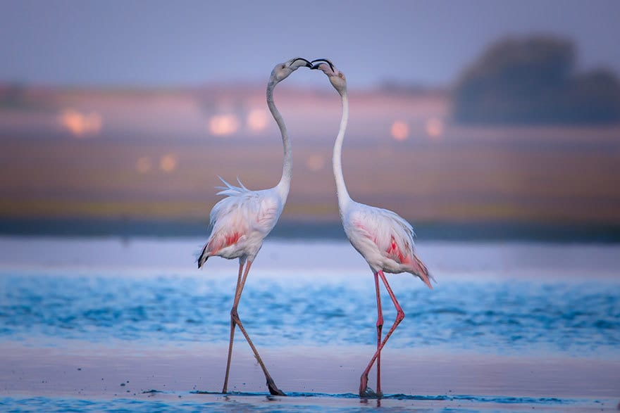 Lovely Flamingos