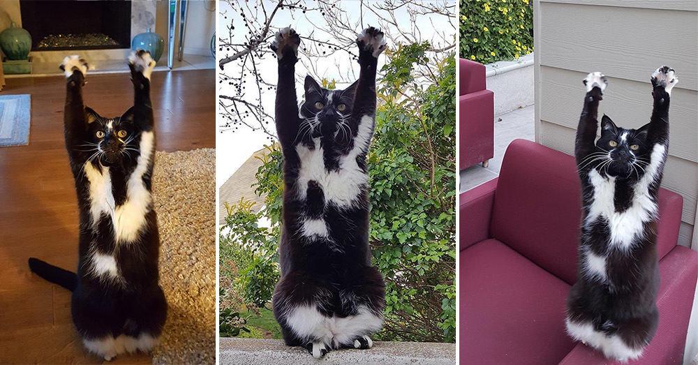 Этот кот каждый раз поднимает лапы вот так, когда видит хозяина