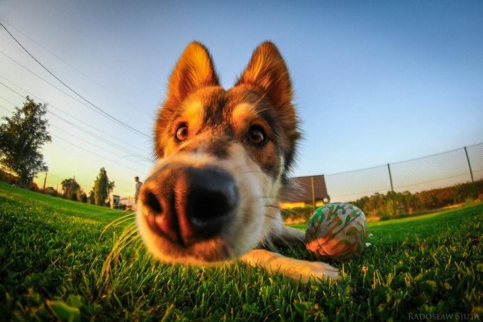 У собаки есть нос. И это прекрасно! 20 самых любопытных собачьих носов в максимальном приближении