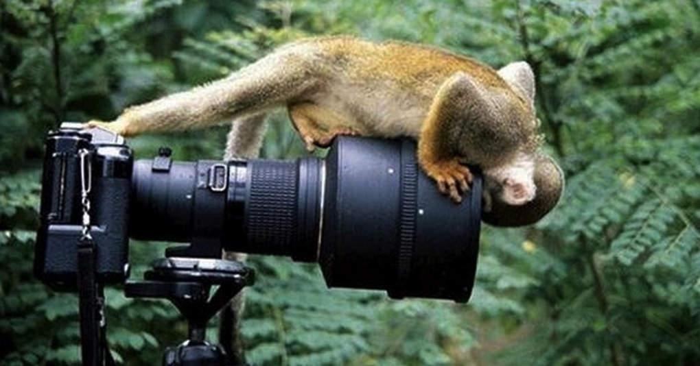 15 животных, которые безумно любят фотографироваться