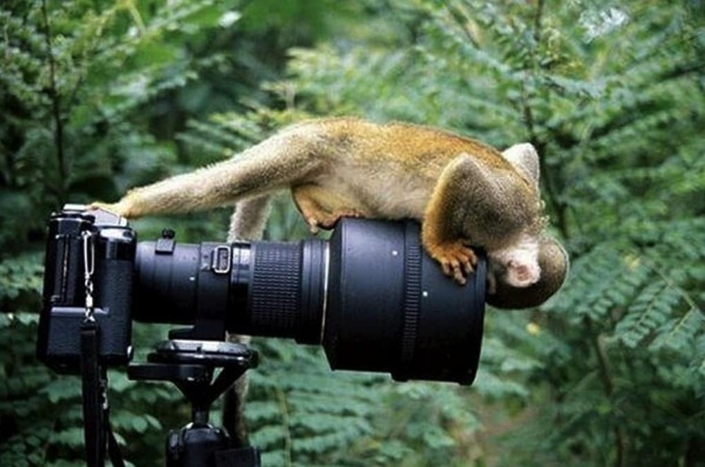 animal-photographers-23