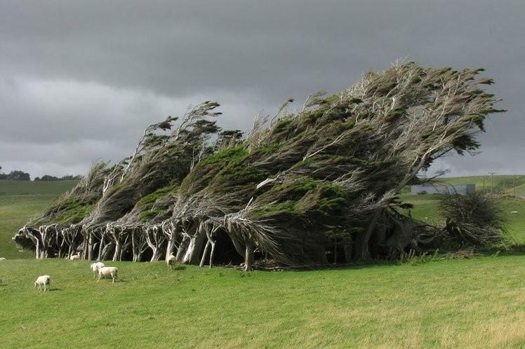 15 деревьев, которые как будто попали к нам с другой планеты