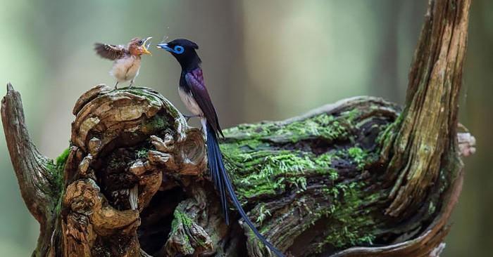 20 редких фотографий о том, как птицы заботятся о своих малышах