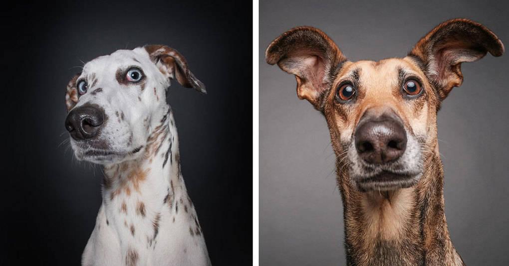 Собаки, интересующиеся умственным здоровьем фотографа