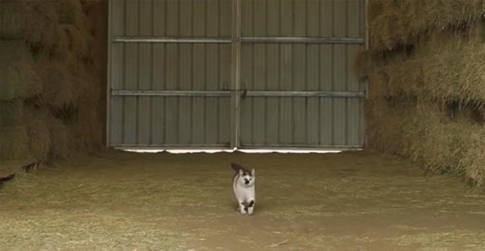 Работа для кошек, которая спасает им жизнь!