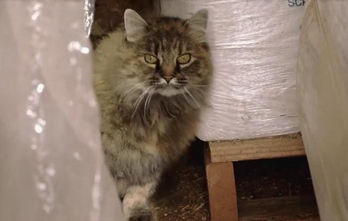 shelter-cats-work-job-farm-livin-6