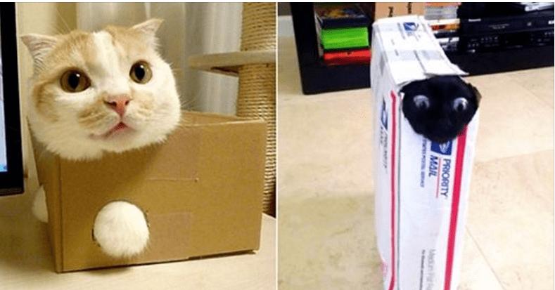 12 любопытных котов, которые считают, что каждая коробка должна быть исследована