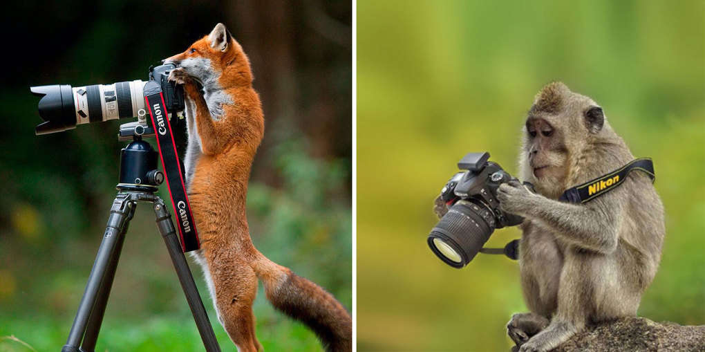 18 животных, которые безумно любят фотографировать