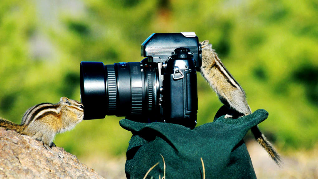 Funny-Animal-And-Camera-Wallpaper-Desktop-1865