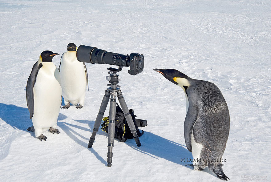 Penguin With Camera