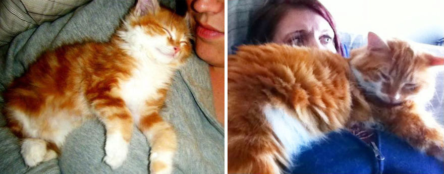 before-and-after-growing-up-cats-28__880