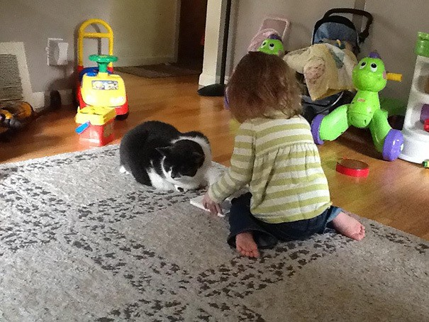 "My Wife Told My Daughter That The Kitty Was Hurt (arthritis) And To Be Careful With Her. Daughter: ""Ok I'll read to her"""
