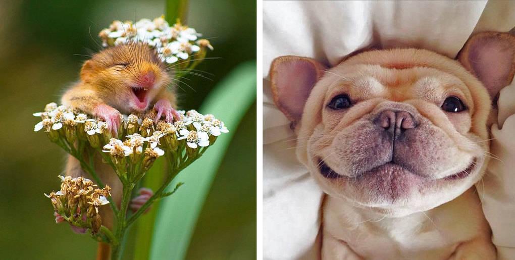 25 улыбающихся животных, которые заставят тебя улыбнуться тоже