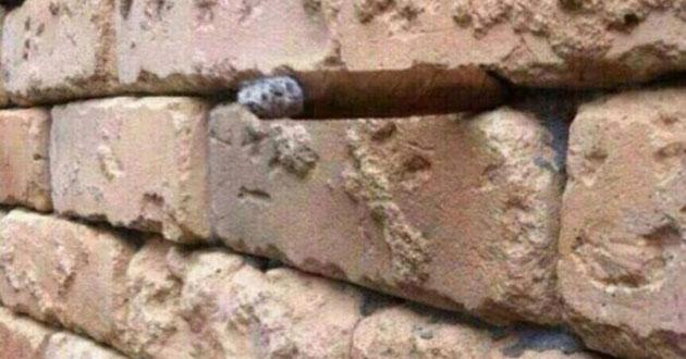 Видите ли вы что-нибудь кроме кирпичной стены?