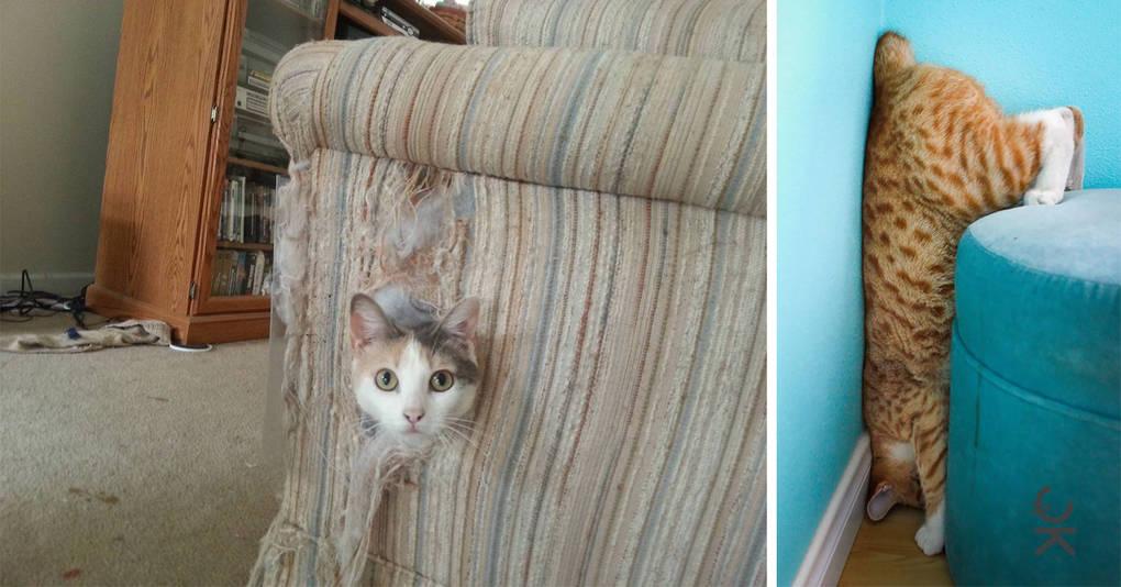20 котов, которые попали в затруднительную ситуацию