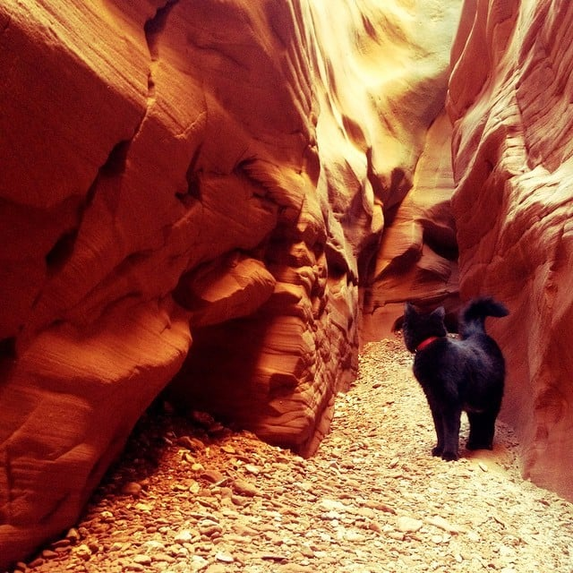 Dry desert daydreams..