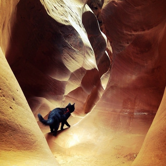 Millie's first slot canyon. Little Wild Horse.