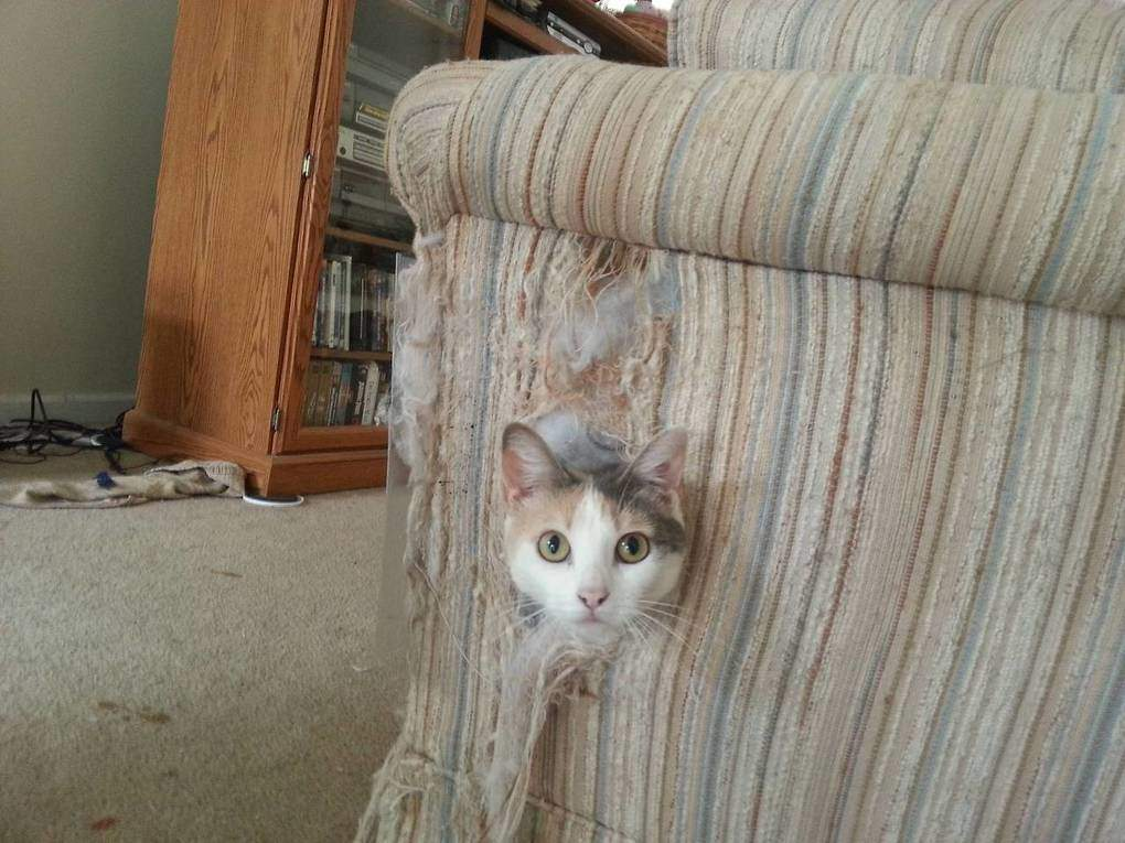 cat-kills-couch
