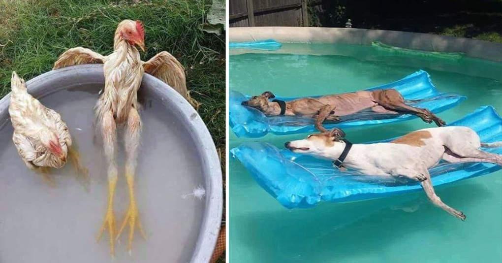 25 забавных фотографий о том, как круто животные проводят знойное лето