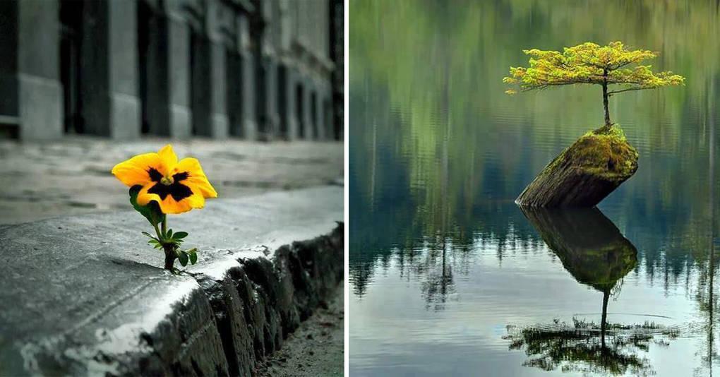 Природа всегда найдет свой путь