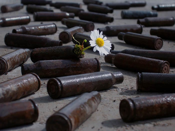 Daisy growing out of an empty bullet