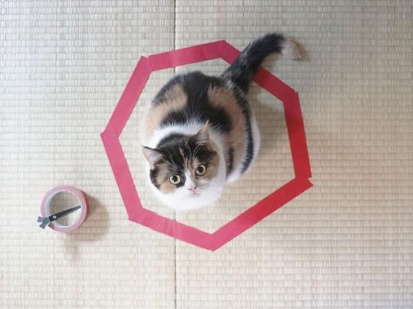 12119860-R3L8T8D-600-cat-logic-funny-73__605
