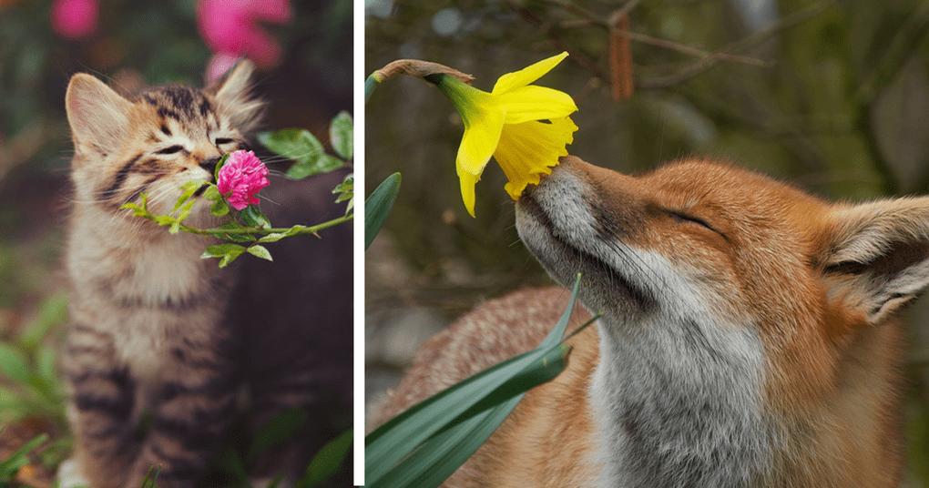 30 животных, которые безумно любят запахи лета