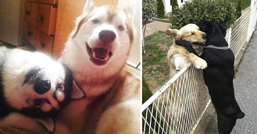 20 фотографий о том, что у собак тоже может быть крепкая дружба
