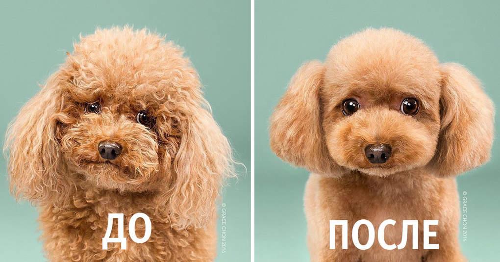 16 милых собачек до и после стрижки