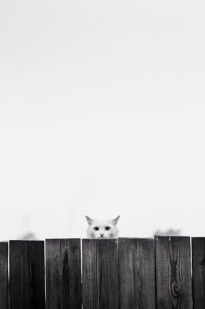 minimalizm7