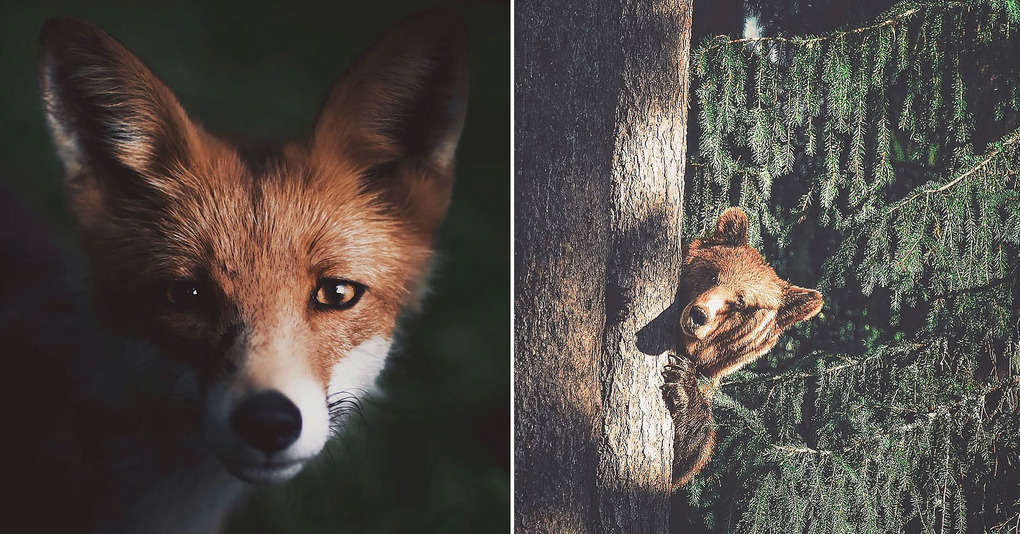 Этот фотограф снимает невероятно атмосферные портреты лесных обитателей