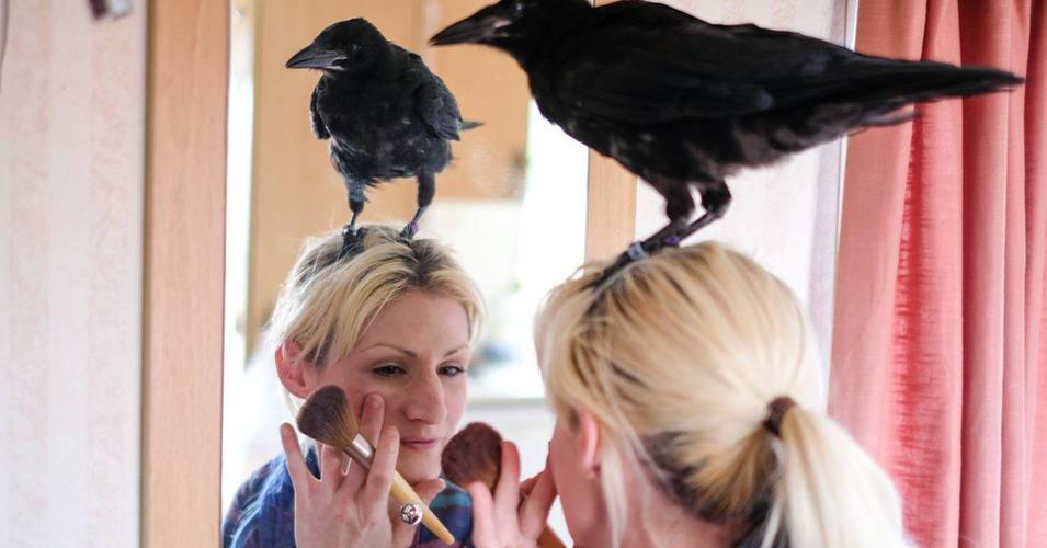 Благодарный ворон не хочет покидать свою спасительницу и живет вместе с ней