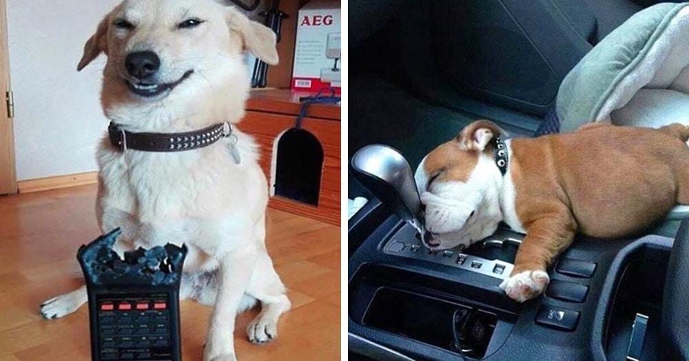 19 фотографий, доказывающих, что тому, кто завёл собаку, скучать не придётся