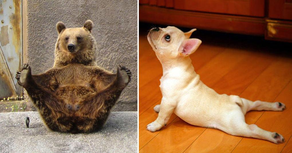 20 животных которые постигли искусство йоги в совершенстве
