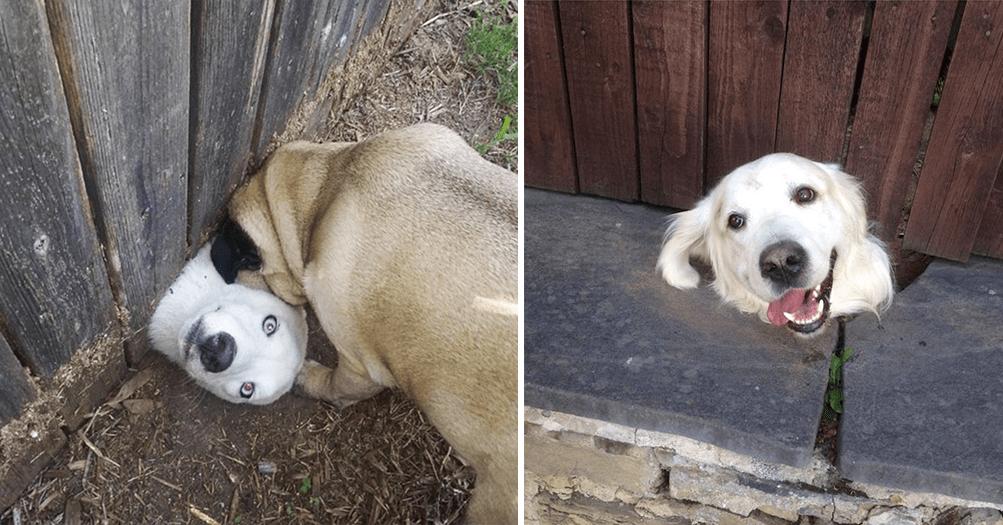 15 собак, которые просто очень хотят сказать тебе «привет!»