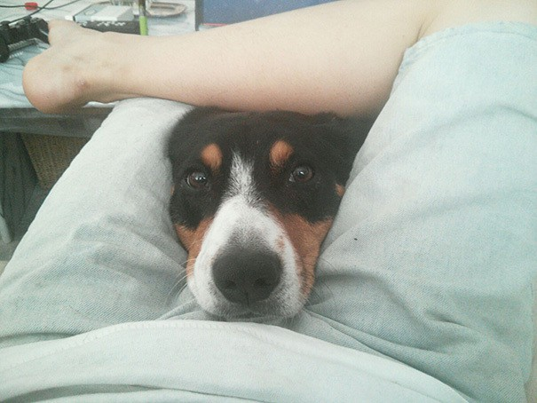 funny-dogs-violate-personal-space-271__605
