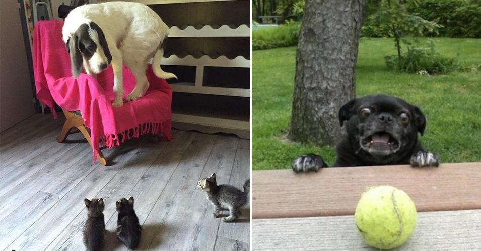 15 собак, которые так запутаны этим миром