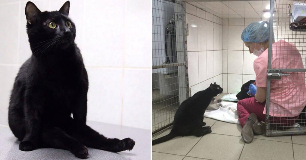 Спасенный кот, который не может ходить, начал помогать клинике лечить других животных